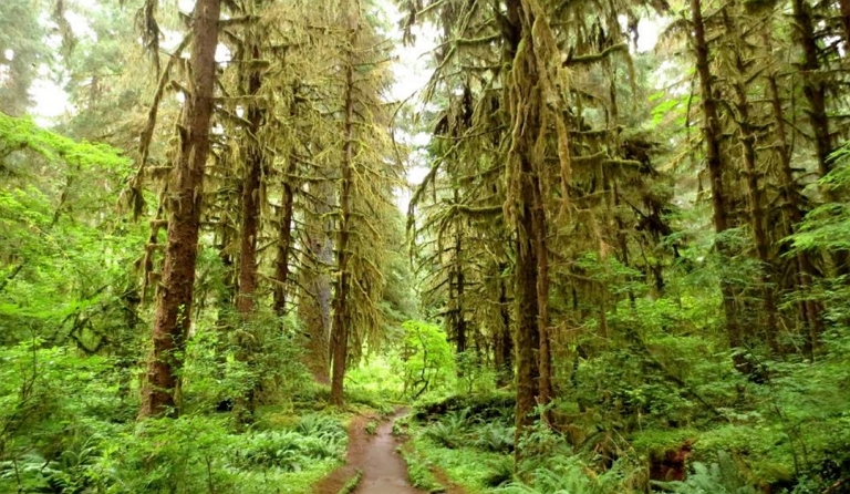 olympic-national-park_14